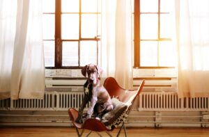 How Having a Pet Benefits Your Health