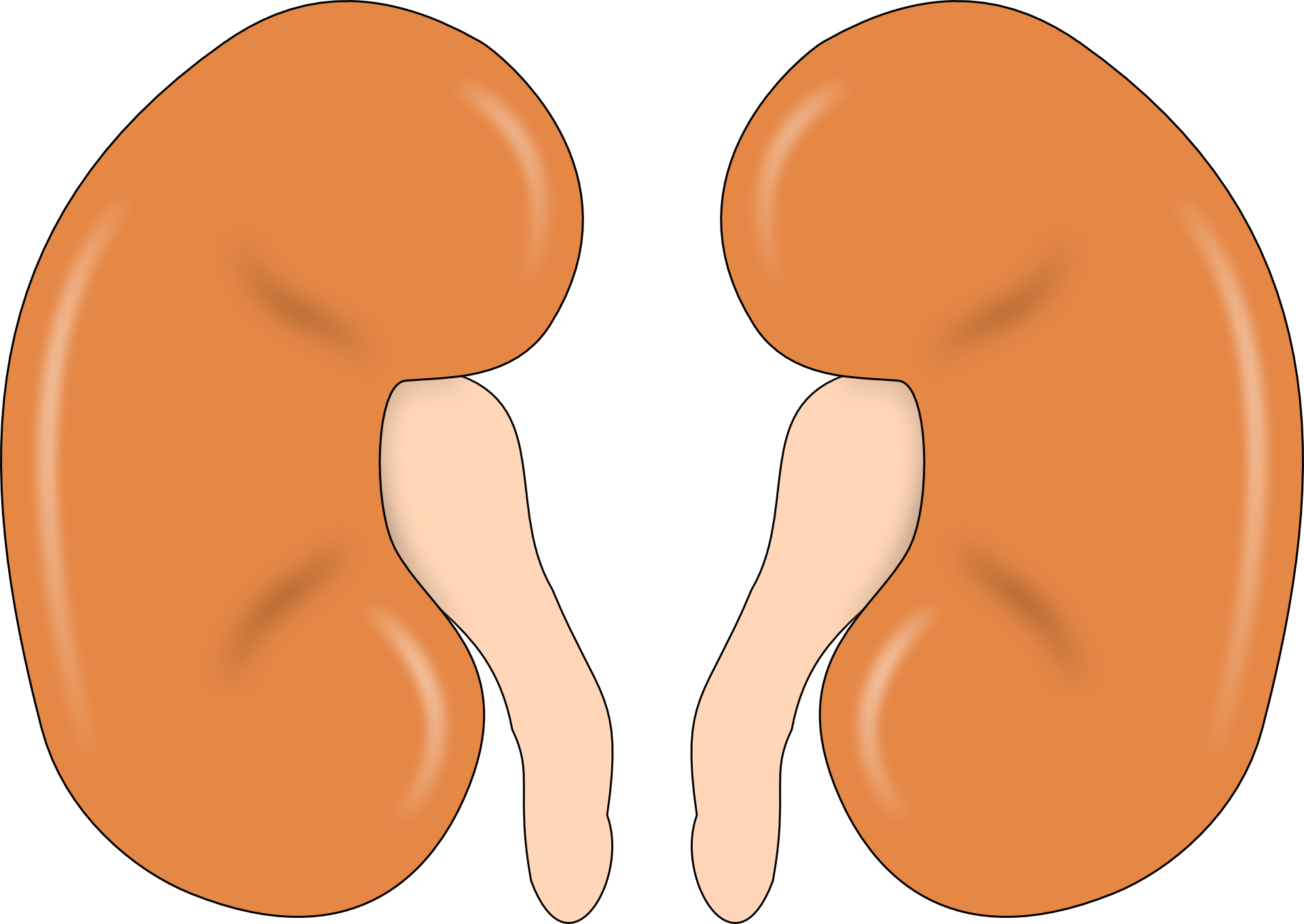 Prevention of Kidney Failure and Diseases